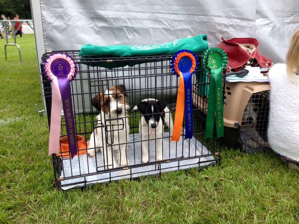 Tommy and his daughter Amy after winning Best of Breed and Best Puppy at a championship show.