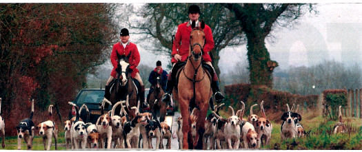 Cumberland Farmers Foxhounds one of our many Cumbrian Hunts.The master of the hunt is leading the hounds to the village of Welton for the start.